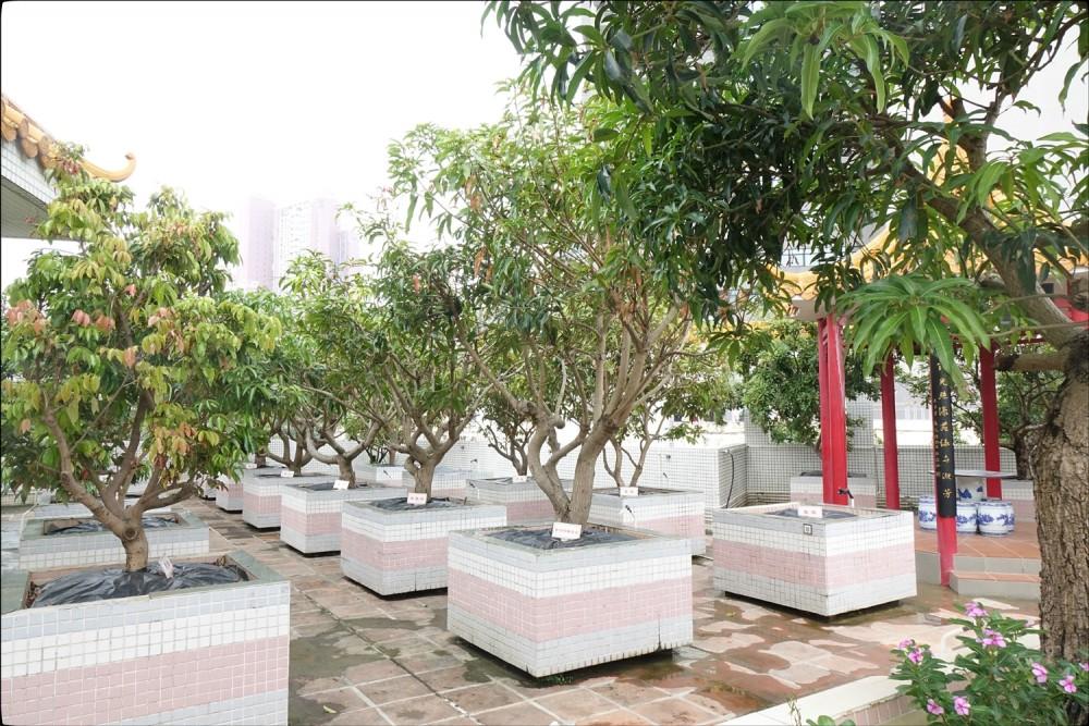 天台植物園